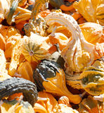 Gourds in a bunch Royalty Free Stock Photos