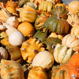 Gourds in a bunch Stock Image
