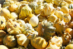 Gourds in a bunch royalty free stock photo