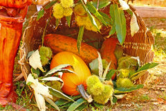 Gourds and chestnuts Royalty Free Stock Photography