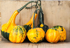 Gourds Royalty Free Stock Photography