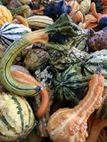 Gourds. Colorful gords. Many different shapes. Royalty Free Stock Photos