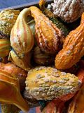 Gourds. Colorful gourds in a wooden box stock photography