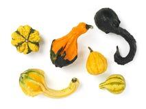 Gourds coloridos imagens de stock royalty free
