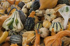 Gourds coloridos Fotografia de Stock Royalty Free