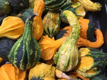 Small Gourds of all colors and shapes. Gourds in colors of green, yellow, orange, almost black. Some of the gourds are heavily warted and some have smooth ridges stock photo