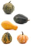 Gourds composite. Composite picture of five different gourds Royalty Free Stock Photos