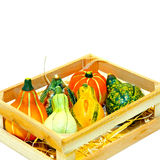 Gourds in crate Stock Images