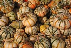 Gourds da colheita imagem de stock