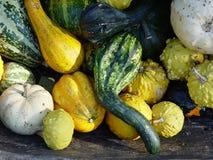Gourds da queda imagens de stock