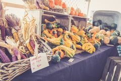Gourds and decorative corn for sale in baskets at the farmer`s market for fall harvest royalty free stock image