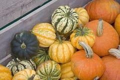 Gourds decorativos imagens de stock