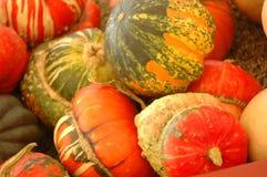 Gourds decorativos coloridos da colheita da queda Fotos de Stock Royalty Free