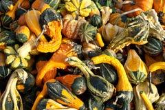 Gourds diminutos Fotografia de Stock Royalty Free