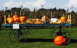 Gourds do outono Fotografia de Stock