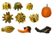 Gourds e abóboras imagens de stock