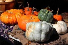 Gourds e abóboras fotos de stock royalty free