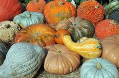 Gourds e polpa Imagens de Stock Royalty Free