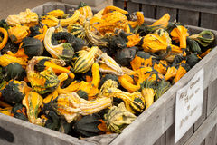 Gourds Farmers Market Stock Photography