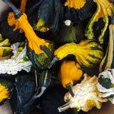 Gourds Galore Fotos de Stock
