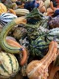gourds Gords coloridos Muitas formas diferentes fotos de stock royalty free