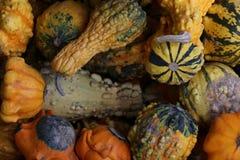 Gourds. Harvested in Ontario, Canada stock photos