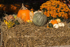 Gourds on hay Stock Photography