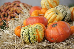 Gourds on Hay Royalty Free Stock Photography