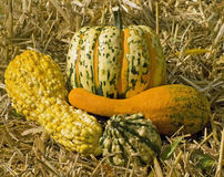 Gourds on haybale. Gourds and decorative pumpkin on haybale Royalty Free Stock Image