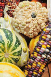 Gourds And Indian Corn Royalty Free Stock Images