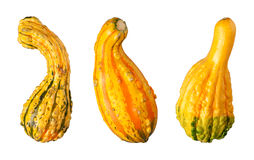 Gourds isolated on a white background Stock Photos