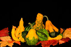 Gourds & Leaves Centerpiece Royalty Free Stock Image