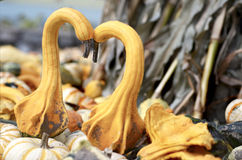Gourds In Love Royalty Free Stock Photography