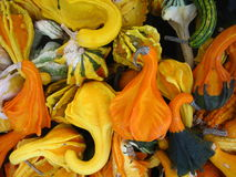 Gourds and more Gourds. Fall harvest of all kinda of gourd royalty free stock photo