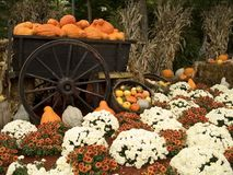 Gourds and Mums. This is an Autumn display of pumpkins, gourds and mums stock images