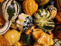 Gourds. Off the field Stock Photo