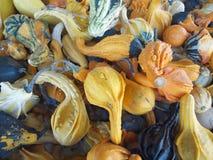 gourds ornametal Стоковое Фото