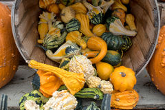 Gourds and Pumpkin Display. Autumn farm display of pumpkins and gourds Stock Photos