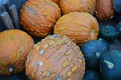 Gourds at the pumpkin patch. Gourds for sale in a bin at the pumpkin patch royalty free stock photos