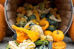 Gourds and Pumpkin Thanksgiving Display. Autumn farm display of pumpkins and gourds Royalty Free Stock Photography