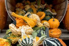 Gourds and Pumpkin Thanksgiving Display. Autumn farm display of pumpkins and gourds Royalty Free Stock Photos