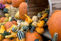 Gourds and Pumpkin Thanksgiving Display. Autumn farm display of pumpkins and gourds Stock Photo