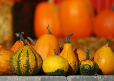 Gourds and Pumpkins Stock Photography