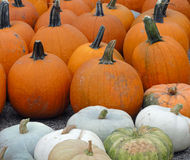 Gourds and pumpkins Stock Photos