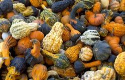 Gourds & Pumpkins Stock Photo