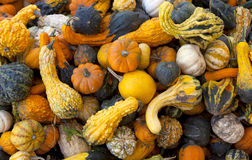 Gourds & Pumpkins Royalty Free Stock Photo