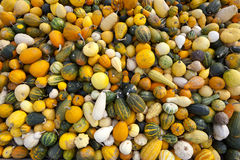 Gourds & Pumpkins Royalty Free Stock Image