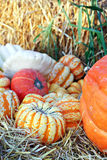 Gourds and Pumpkins Stock Photo