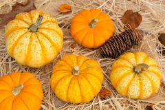 Gourds and Pumpkins Royalty Free Stock Photo