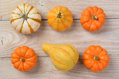 Gourds and Pumpkins High Angle Stock Image